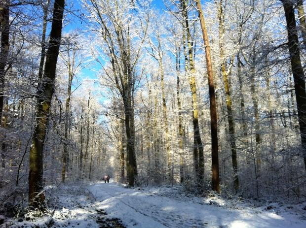 Winterwonderland Februar 2015