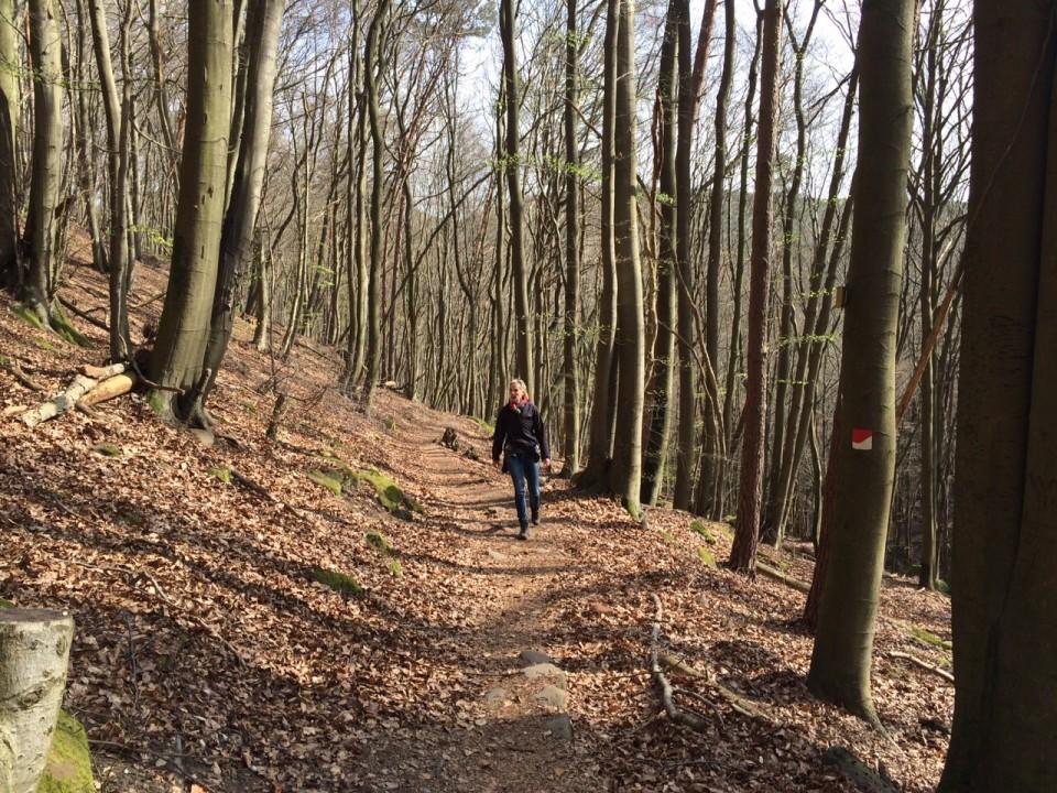 Wandern im Pfälzer Wald - Deidesheim