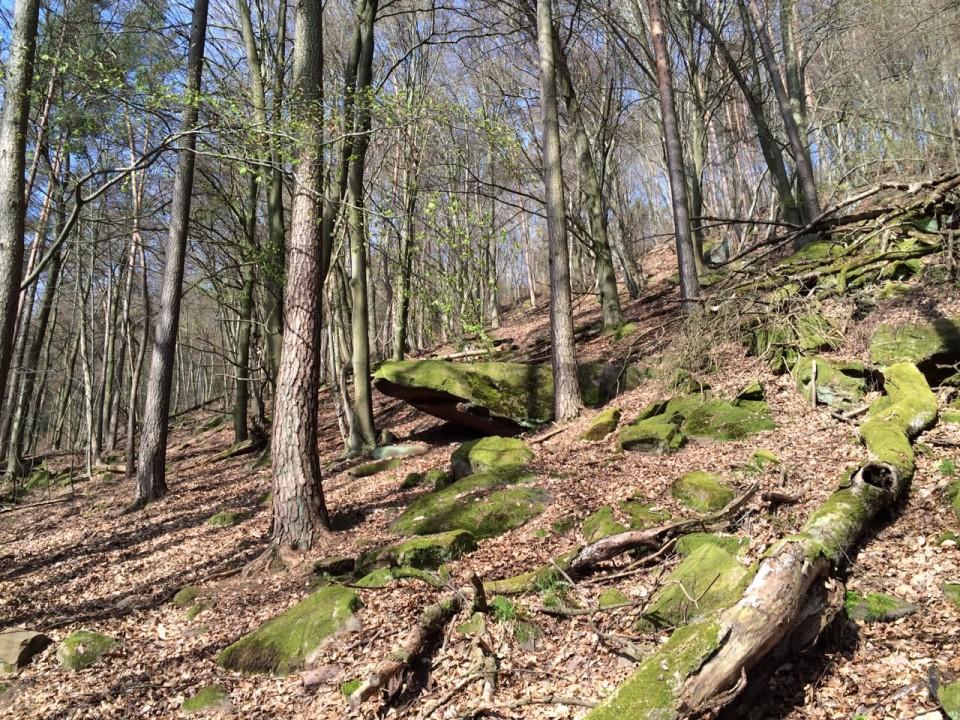 Naturpark Pfälzer Wald - Deidesheim