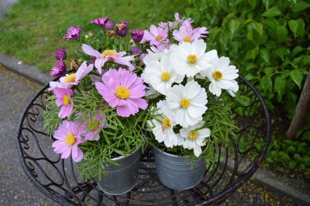 Blumen bei Mato'sFischladen Herrsching am Ammersee