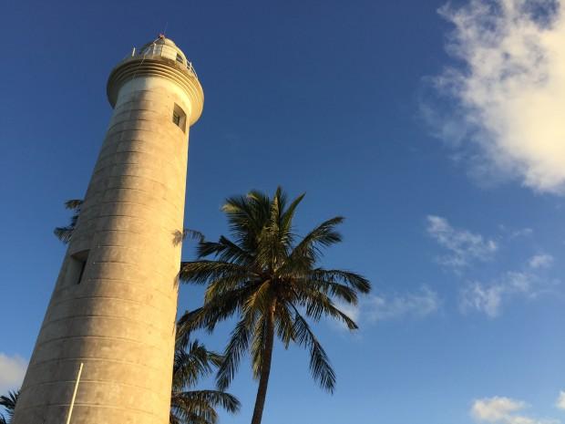 Palmen Galle Sri Lanka