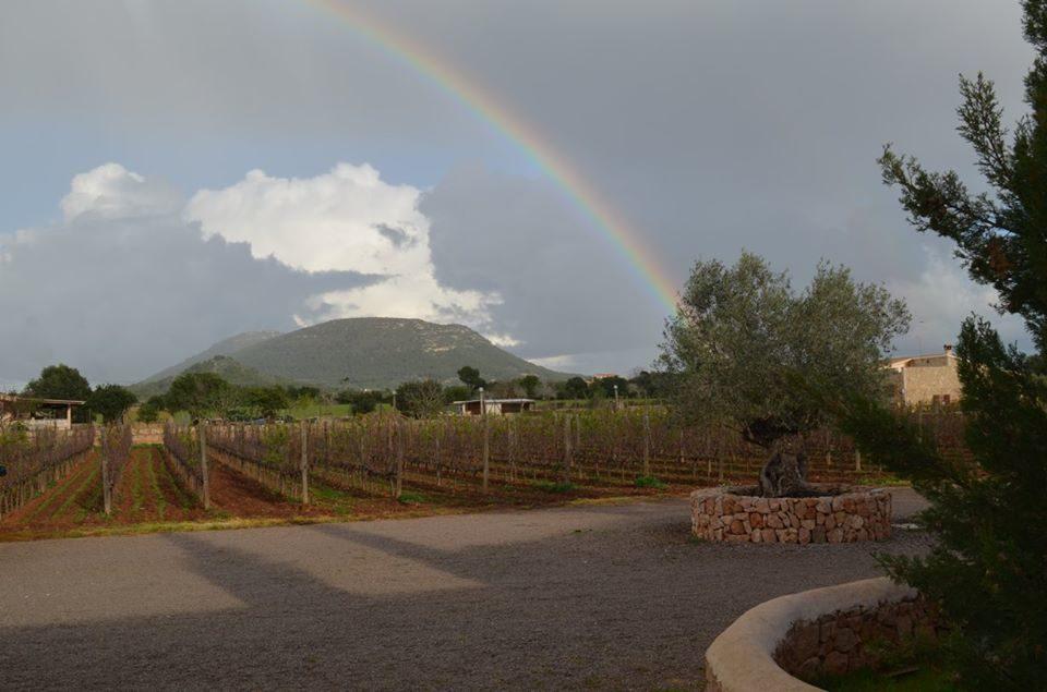 2. Advent auf Mallorca - Bodega Maruccia - Lieblingsflecken